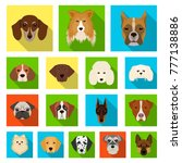 dog breeds flat icons in set... | Shutterstock .eps vector #777138886