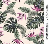 exotic vector flowers tropical... | Shutterstock .eps vector #777148288