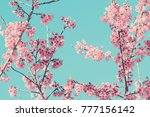 pink blossoms on the branch... | Shutterstock . vector #777156142