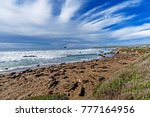 northern elephant seals basking ... | Shutterstock . vector #777164956