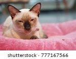 sleepy siamese cat on a pink... | Shutterstock . vector #777167566