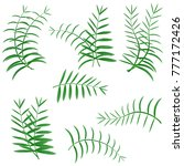 palm leaf. realistic palm leafs ... | Shutterstock .eps vector #777172426