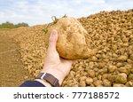 sugar beet in a hand of a farmer | Shutterstock . vector #777188572