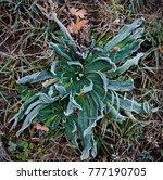 crystals of frozen water called ... | Shutterstock . vector #777190705
