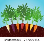 rainbow carrots illustration.... | Shutterstock .eps vector #777209416