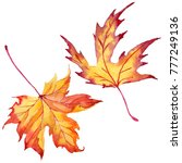 maple leaves in a watercolor... | Shutterstock . vector #777249136