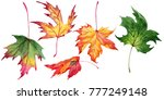 maple leaves in a watercolor... | Shutterstock . vector #777249148