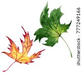 maple leaves in a watercolor... | Shutterstock . vector #777249166