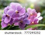 purple orchid flower | Shutterstock . vector #777295252