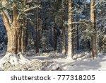 caledonian scots pine in snow... | Shutterstock . vector #777318205