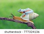 tree frog  flying frog  javan... | Shutterstock . vector #777324136