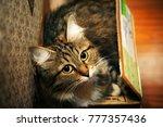 Stock photo funny cat portraits 777357436