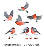 watercolor bullfinch winter... | Shutterstock . vector #777399706