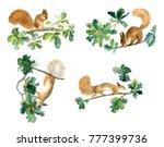 Watercolor Squirrels On Oak...