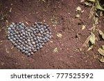 heart made of eucalyptus seeds... | Shutterstock . vector #777525592