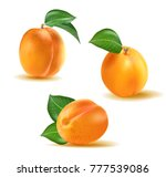 apricot vector set. collection... | Shutterstock .eps vector #777539086
