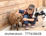 Stock photo cute little boy with sheep in petting zoo 777618628