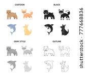 wild animal bear  ravenous... | Shutterstock .eps vector #777668836