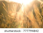 pasture at sunset. it is lands... | Shutterstock . vector #777794842