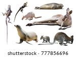 set of various isolated wild... | Shutterstock . vector #777856696