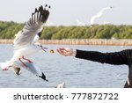 Seagull Eat Food From People...