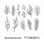 vector branches and leaves.... | Shutterstock .eps vector #777884872