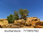 Yellow Rocks In The Desert Wit...