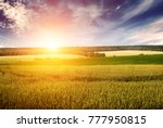 wheat field  blue sky and dawn... | Shutterstock . vector #777950815