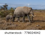 Mother Elephant  With Her...