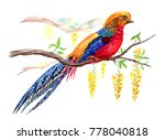 Golden Pheasant On A Branch Of...