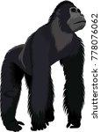 vector male gorilla   Shutterstock .eps vector #778076062