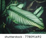 beautiful of green tropical... | Shutterstock . vector #778091692