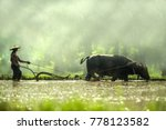 farmer using buffalo plowing... | Shutterstock . vector #778123582