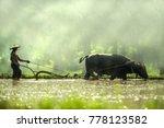 farmer using buffalo plowing... | Shutterstock . vector #778123582