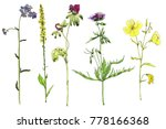 set of watercolor and ink... | Shutterstock . vector #778166368