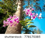 thai orchid flowers on a... | Shutterstock . vector #778170385