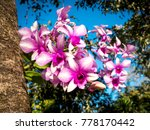 thai orchid flowers on a... | Shutterstock . vector #778170442