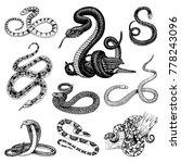 Set Viper Snake. Serpent Cobra...
