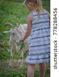 Small photo of Little girl in a dress feeds a goat grass