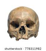 human skull on a white... | Shutterstock . vector #778311982