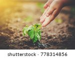 bean sprouts and watering.... | Shutterstock . vector #778314856