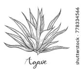 Hand Drawn Cactus Blue Agave....