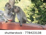two monkeys are sitting on the... | Shutterstock . vector #778423138