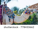 camel animal decorated with... | Shutterstock . vector #778433662