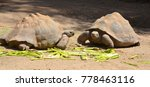 the galapagos tortoise or... | Shutterstock . vector #778463116