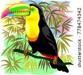 colorful exotic toco toucan ... | Shutterstock .eps vector #778474342