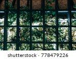Through The Pergola Garden...