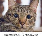 Cutie Cat  Tabby Cat