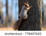 animals in wildlife. amazing... | Shutterstock . vector #778607632