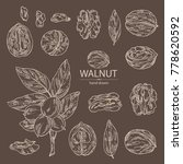 collection of walnut  nuts and... | Shutterstock .eps vector #778620592